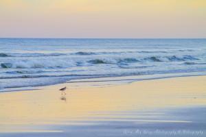 Bird and Beach